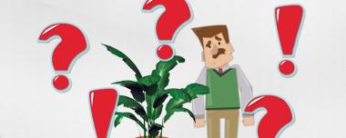 ¿Qué es NomenPlantor?